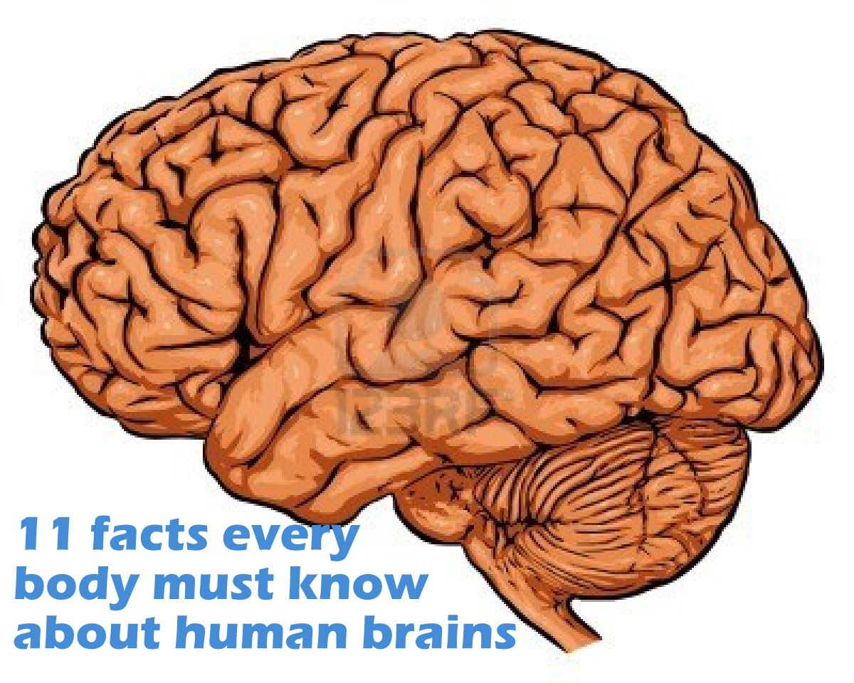 11 facts everybody must know about human brains | MyEduSpot